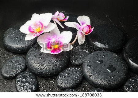 Spa concept with pink with red orchid (mini phalaenopsis) flower and zen stones with drops closeup