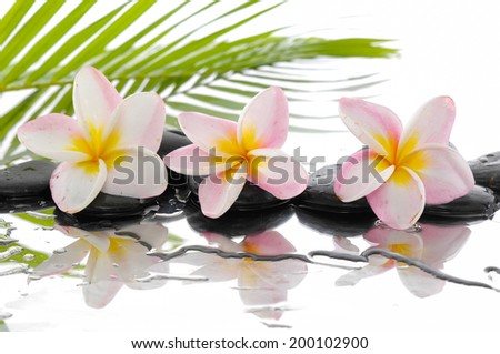 spa concept with three frangipani and wet black stones with palm leaf - stock photo