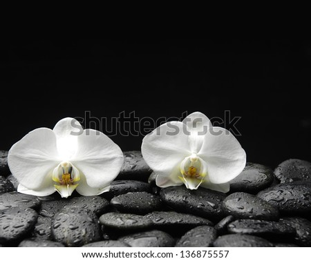 Spa concept with two white orchid on wet stones