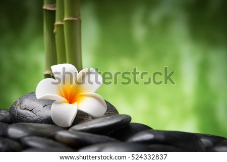 spa concept with zen basalt stones bamboo and Frangipani flower