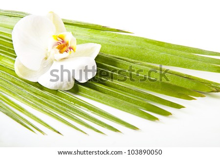 spa decor, flowers and water stones - stock photo