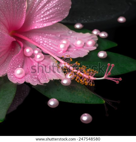spa healthcare of pink hibiscus flower on green leaf with drops on zen stones and pearl beads in reflection water, closeup  - stock photo