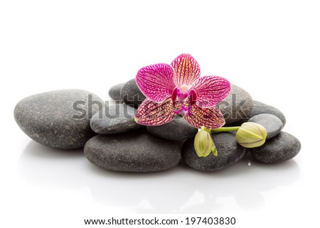 Spa masage stones and orchid isolated on the white background.