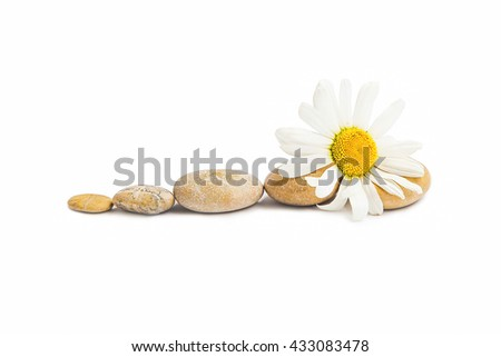 Spa massage stones with chamomile flower isolated, balance concept - stock photo