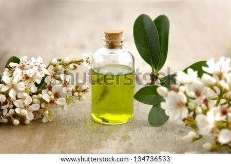 spa oil with branch spring flower on board