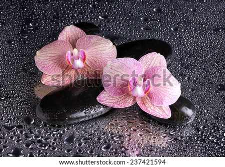 Spa pebbles and pink orchids on wet background  - stock photo