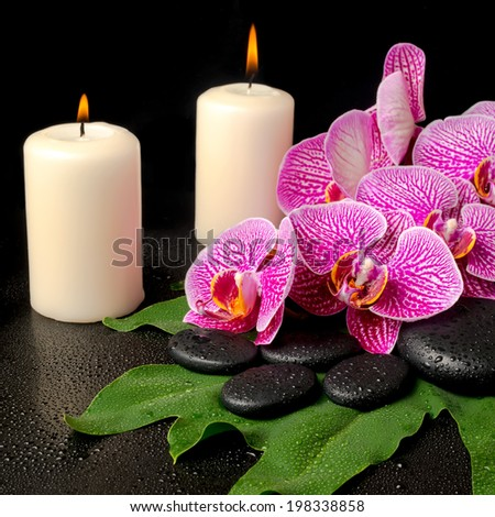 spa set of zen stones with drops, blooming twig of stripped violet orchid (phalaenopsis ) on green leaf and candles, closeup - stock photo