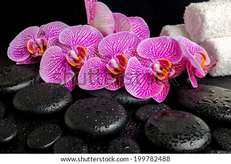 spa setting of blooming twig of stripped violet orchid (phalaenopsis ) on zen stones with drops, and stacked of towels - stock photo
