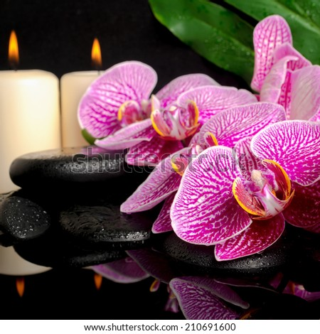 spa setting of blooming twig stripped violet orchid (phalaenopsis ), zen stones, big green leaf and  candles with drops and reflection on water  - stock photo