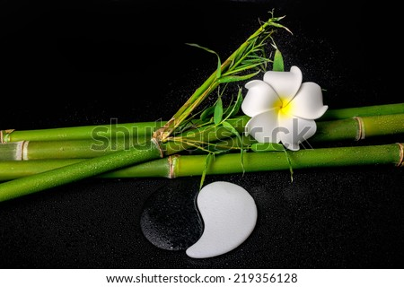 spa setting of white frangipani flower, symbol Yin Yang and natural bamboo with leaves on zen basalt stones with drops - stock photo