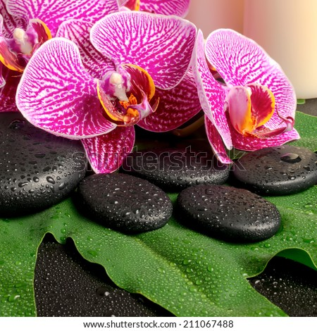 spa still life of blooming twig of stripped violet orchid (phalaenopsis ), zen stones with drop and candles on the big green leaf  - stock photo