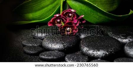 Spa still life of deep purple orchid flower, phalaenopsis and zen stones with drops on black  background, panorama - stock photo