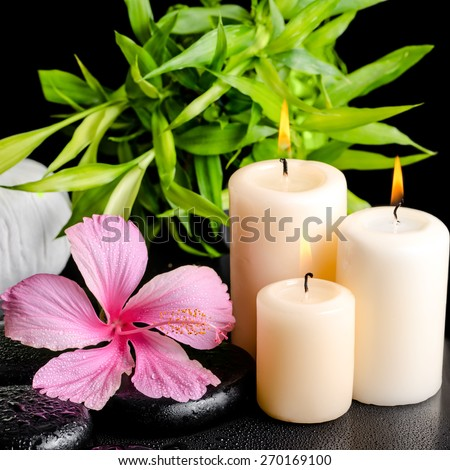 spa still life of pink hibiscus flower, twig bamboo, thai herbal compress balls and candles on zen basalt stones with drops, closeup - stock photo