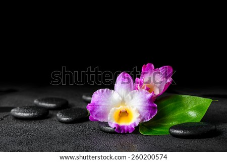 spa still life of purple orchid dendrobium and green leaf Calla lily with dew on black zen stones - stock photo