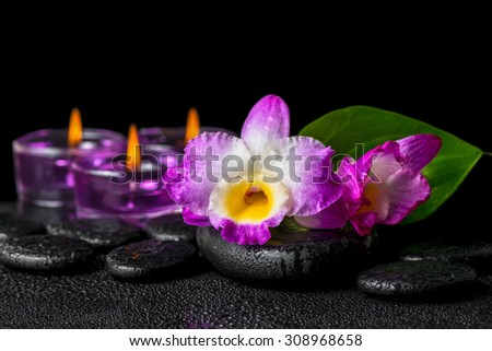 spa still life of purple orchid dendrobium, green leaf Calla lily and candles with drops on black zen stones - stock photo