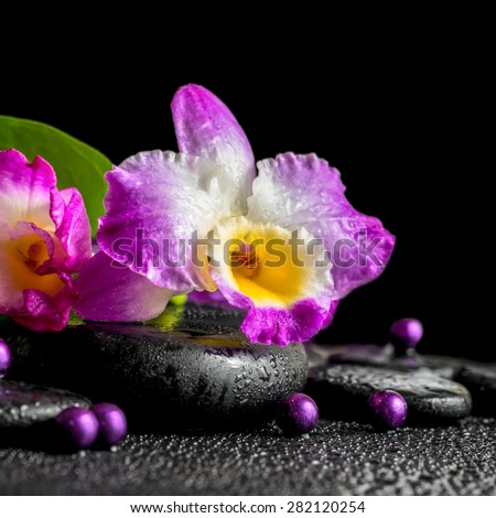 spa still life of purple orchid dendrobium, green leaf Calla lily with dew and pearl beads on black zen stones, closeup  - stock photo