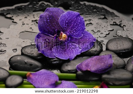 Spa still life with  beautiful orchid and black stones and bamboo grove - stock photo