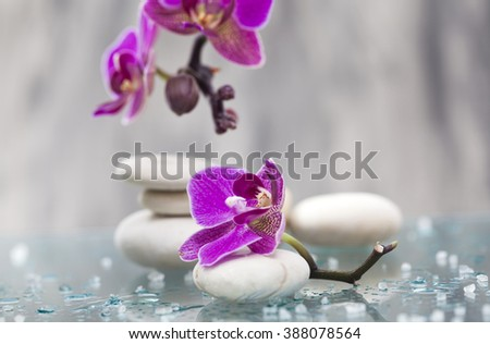 Spa still life with pink orchid and white zen stones - stock photo