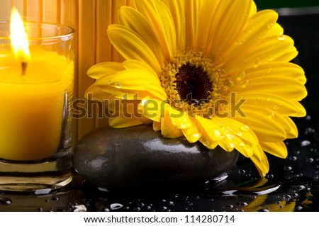 Spa still life with yellow flower with dew, candle and pebble  on dark background with water drop