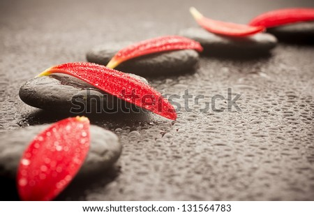 Spa stones and black background. Red gerbera petals.