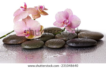 Spa stones and orchid flowers and black stones with reflection  - stock photo