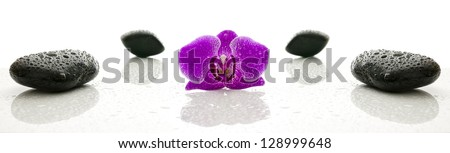 Spa stones and violet orchid flower with water drops representing a wellness concept.