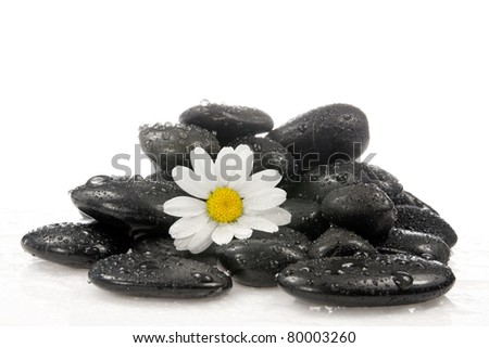 spa stones with a white daisy flower.
