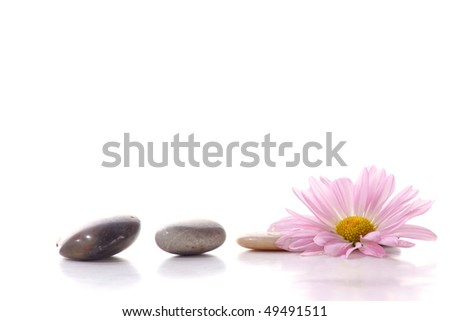 Spa stones with flowers - stock photo