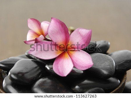 Spa stones with frangipani flower in bowl