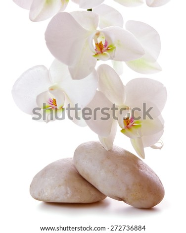 Spa treatment massage stones, with white orchid. - stock photo