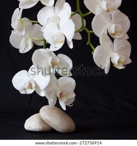 Spa treatment massage stones, with white orchid.Isolated on black background. - stock photo