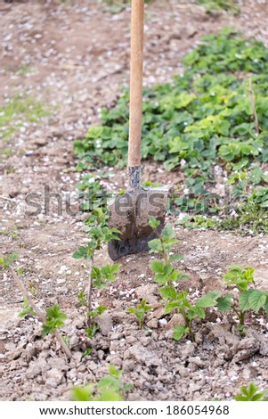 spade in the garden - stock photo