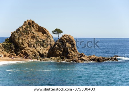 Spain. A pine on the rock at the coast Tossa de Mar