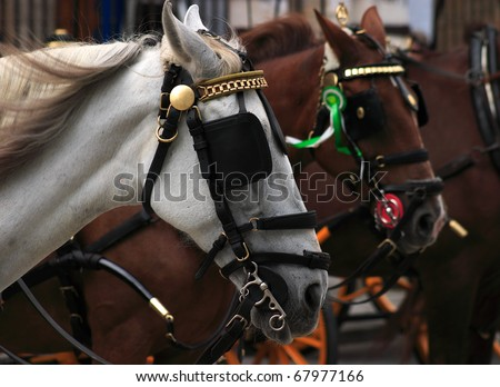 Spain Andalusia Sevillewhite and chestnut colored carriage horses with blinkers in profile