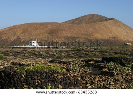 Spain, Canary Islands,Lanzarote, volcanic landscape