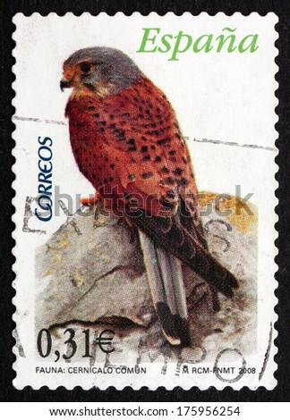 SPAIN - CIRCA 2008: a stamp printed in the Spain shows Common Kestrel, Falco Tinnunculus, Bird of Prey, circa 2008 - stock photo