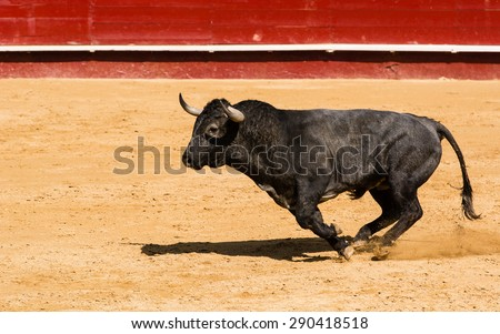 Spanish fighting bull - stock photo