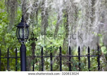 Spanish moss adorns a lamp post in Charleston, South Carolina. - stock photo