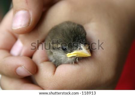 Sparrow on a kid hand - stock photo