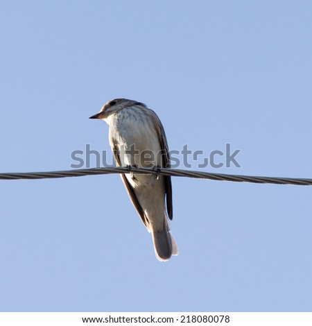 Sparrow on a wire - stock photo