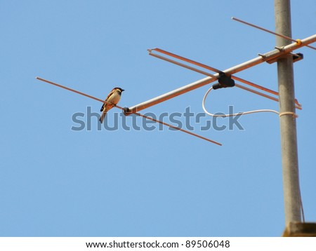 sparrow on the television antenna in sky background