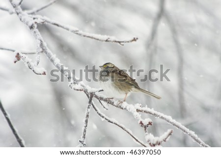 Sparrow sitting in tree in midst of blizzard