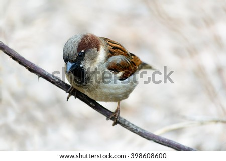 sparrow sitting on a tree. - stock photo