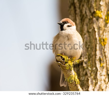 Sparrow sitting on the branch of a tree - stock photo