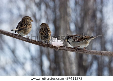 Sparrows willingly accept dieting, and also visit feeding troughs.