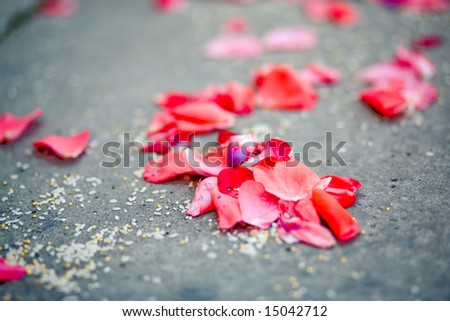 Sparse pink rose petals on asphalt after wedding ceremony, horisontal image.