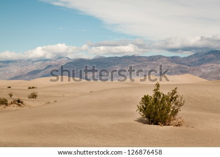Sparse vegetation at the Mesquite flat dunes in Death valley - stock photo