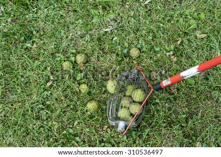 Special tool to pick up fallen black walnuts and other nuts.