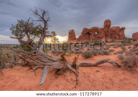 Special Tree at Arches National Park, Utah.