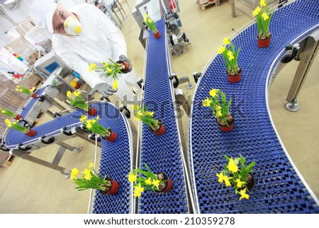 specialist working with flowers on conveyor belt,contemporary business - stock photo